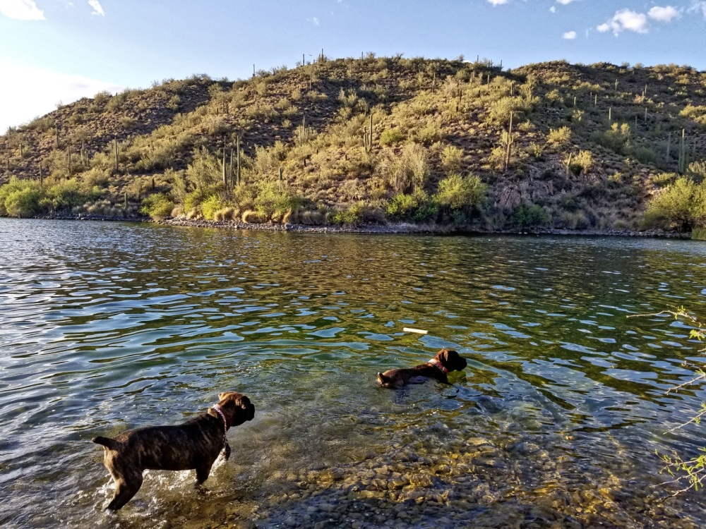Saguaro Lake Dog Friendly