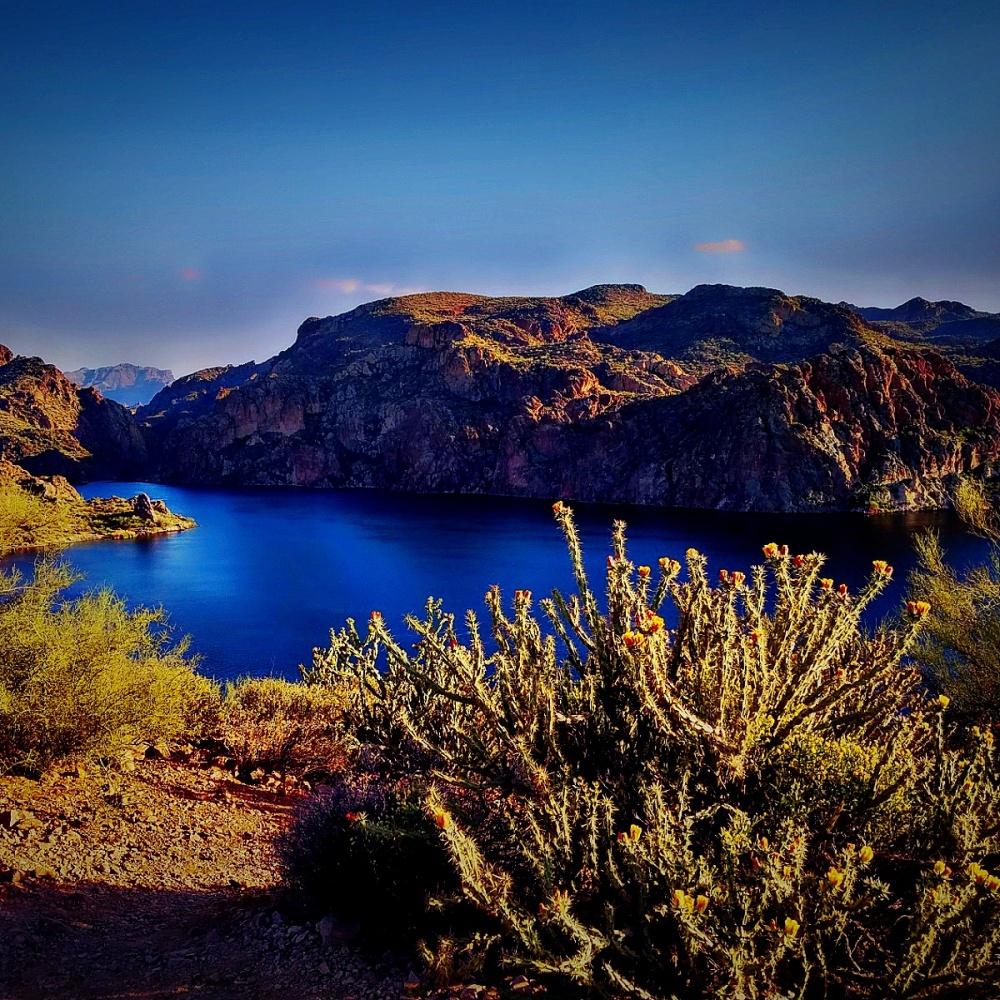 Hiking Butcher Jones Trail  - Cholla cactus blooming along the Butcher Jones Trail at Saguaro Lake,  Arizona