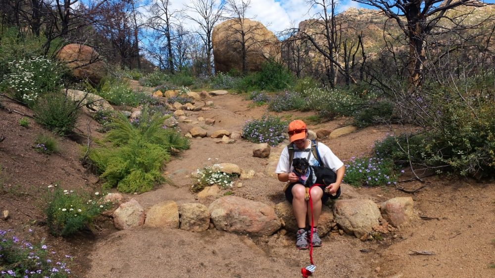 Pam and Boomer taking a break among wildflowers and boulder outcroppings on the Granite Mountain Trail