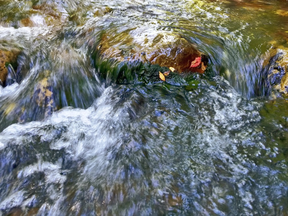 Falling leaves make their way down stream