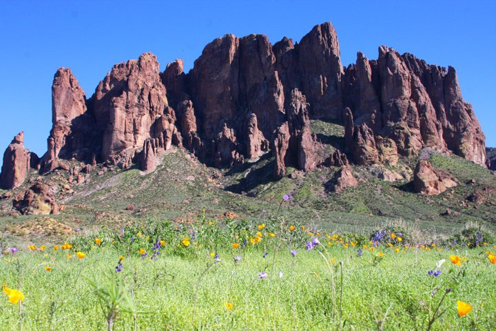 Wildflowers bloom at the base of the Superstition Mountains
